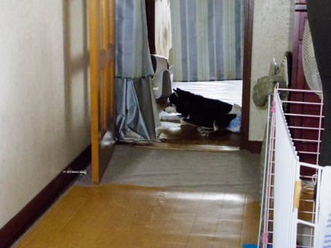 黒柴 静 闘病記